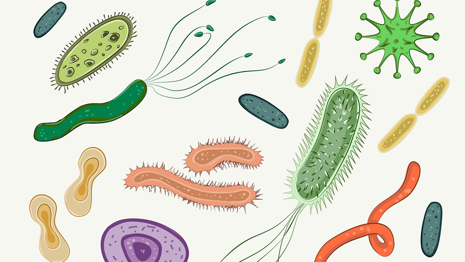 Why the Gut Microbiome is crucial for your Mental Health